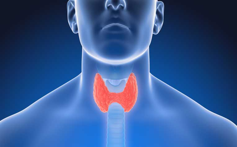 Image result for thyroid