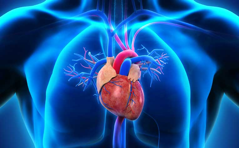 hypertrophic cardiomyopathy: symptoms and diagnosis - healthxchange, Skeleton