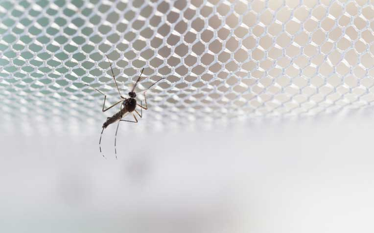​Dengue Fever: Clinical Trial for New Drug​