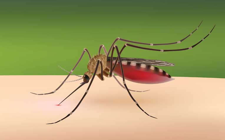 Dengue Fever: New Drug Is Safe