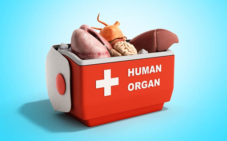 /sites/hexassets/Assets/transplant/types-of-organ-transplants.jpg