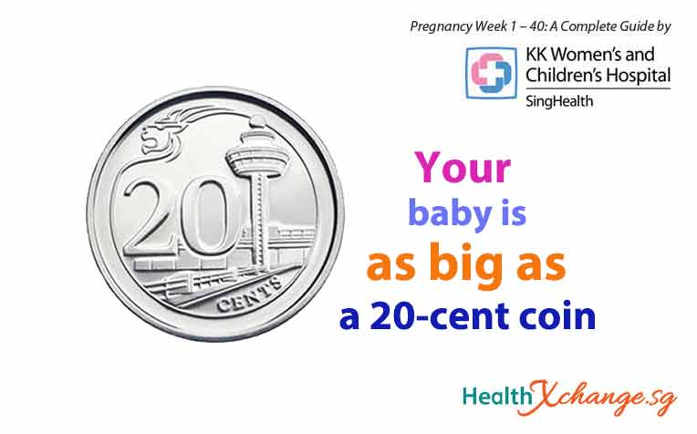 ​Pregnancy Week 9 Baby is as Big as a 20 Cent Singapore Coin!