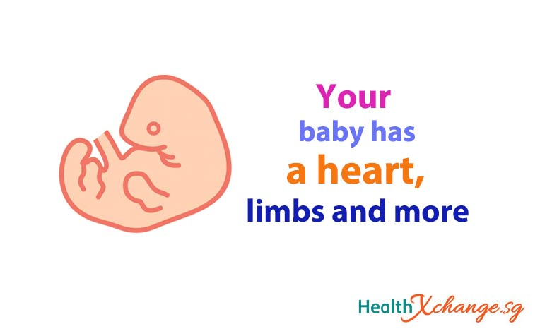 Pregnancy Week 6: Your Baby Has a Heart, Limbs and More