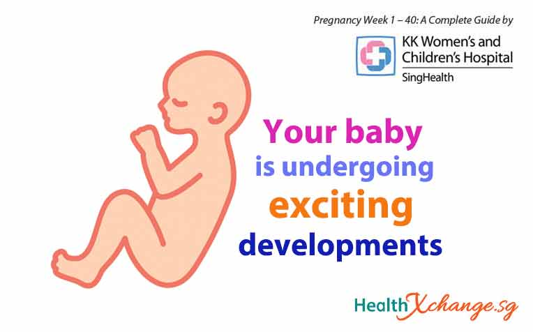 Pregnancy Week 25, 26 and 27: Exciting Baby Developments